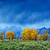 Grand Teton National Park during fall foliage in Moose, Wyoming, along Uhl Hill RD.