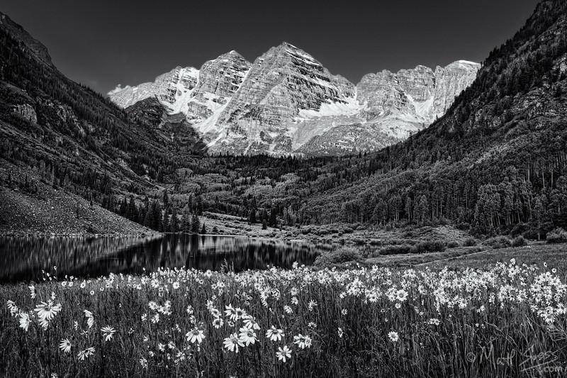 Flowers Below the Bells - Colorado