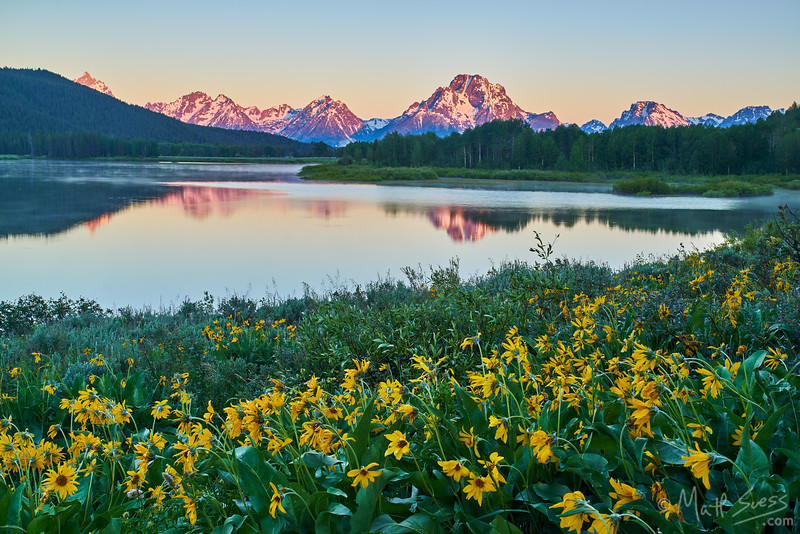 Sunrise at Oxbow Bend Turnout at Grand Teton National Park, Wyoming with yellow Arrowleaf Balsamroot wildflowers