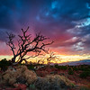 This old juniper tree in Capitol Reef National Park, Utah has certainly seen better days.<br /> <br /> But it made the perfect foreground for me with this shot at sunset!