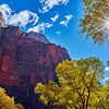 Canyon walls and cotton trees at Zion National Park in Utah during fall foliage.