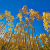 Aspen Glory - Sangre de Cristo Mountains - Santa Fe, NM
