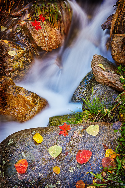 Fall foliage and aspen leaves in the Santa Fe National Forest along a small stream.