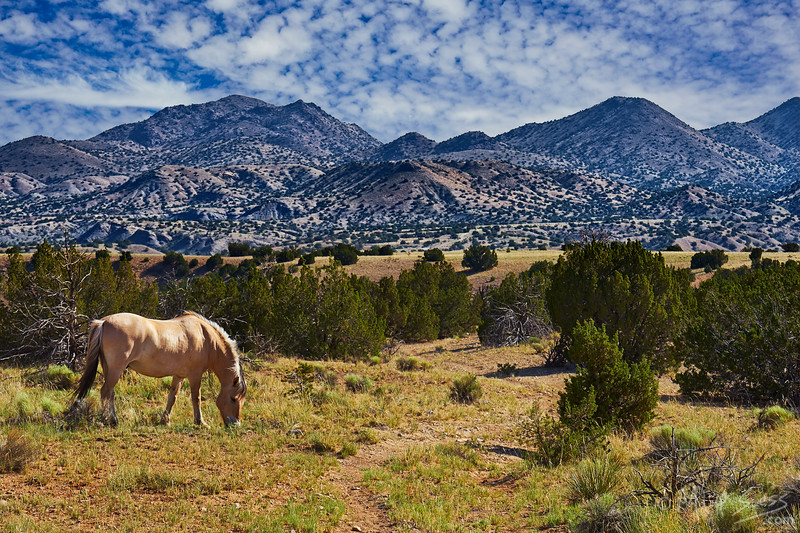 A horse in New Mexico outside Santa Fe