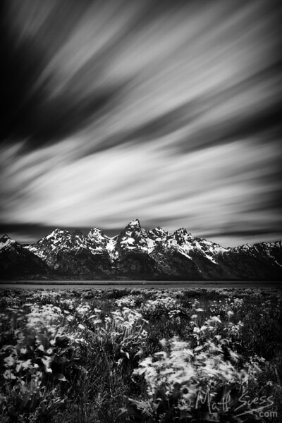 Wildflowers at Grand Teton National Park, Wyoming. Along road between Antelope Flats and Kelly