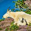 """Enjoying the View"" - Glacier National Park, Montana"
