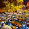 """Chromatic Enchantment"" - Zion Natinal Park, Utah"