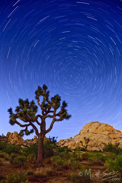 """Joshua Tree Starry Night"" - California."
