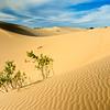 Sand dunes at Monahands Sandhills State Park, Texas