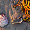 A scallop shell and seaweed photographed on the beach at Mustang Island, Corpus Christi, Texas.