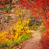 """Fall Colors of Zion"" - Zion National Park, Utah"