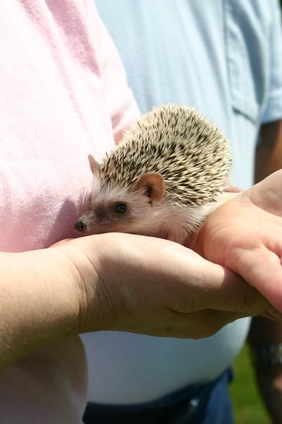Going Home (06/15/2004)  A hedgie gets delivered quite a few hundred miles from home.  Filename reference: 20040615-112617-HAH-Going_Home-SM