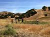 Fossil Hill Revegetation Project