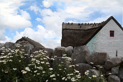 Birds on a Thatched Roof in Ireland