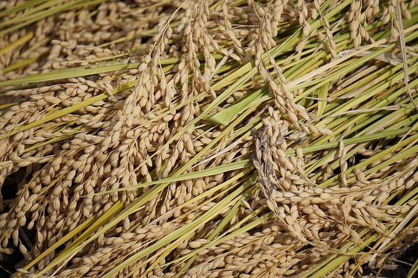 Harvest Series (1)