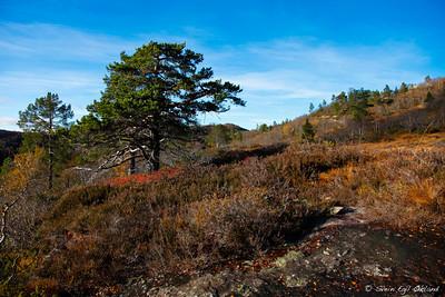 2009, Elgjakt, jakt, hunt, hunting, elk, moose, norge, norway, setesdalen, tveit, tjønndalen, bygland, høst, fall, nature, natur, svein, egil økland, okland