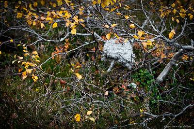 2010, Elgjakt, jakt, hunt, hunting, elk, moose, norge, norway, setesdalen, tveit, tjønndalen, bygland, høst, fall, nature, natur svein, egil økland, okland