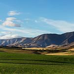 Maniototo Fields