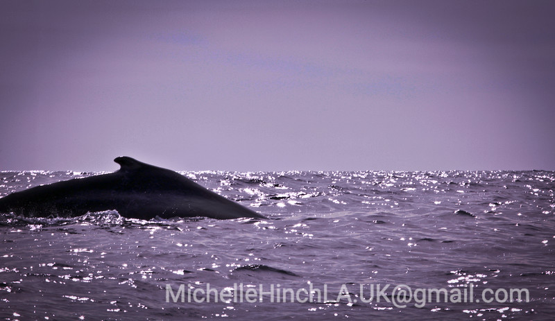 Oceans - Cabo San Lucas 2011