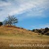 Reflection I - Malibu Canyon 2011
