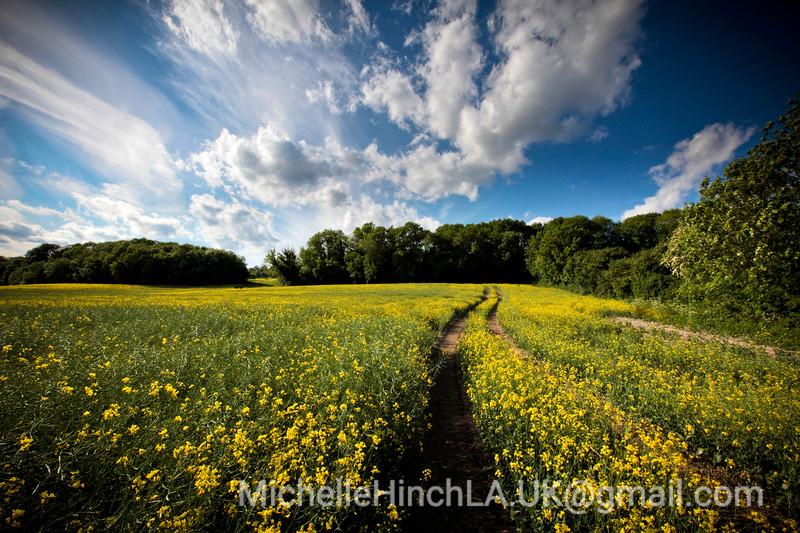The Path - England 2010