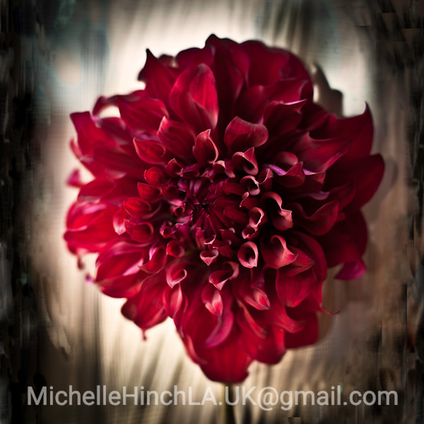 Morning Dahlia- Los Angeles 2011