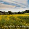 Golden Cottage. England 2010
