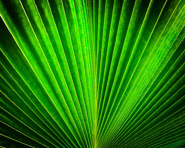 Nigerian Palm Leaf