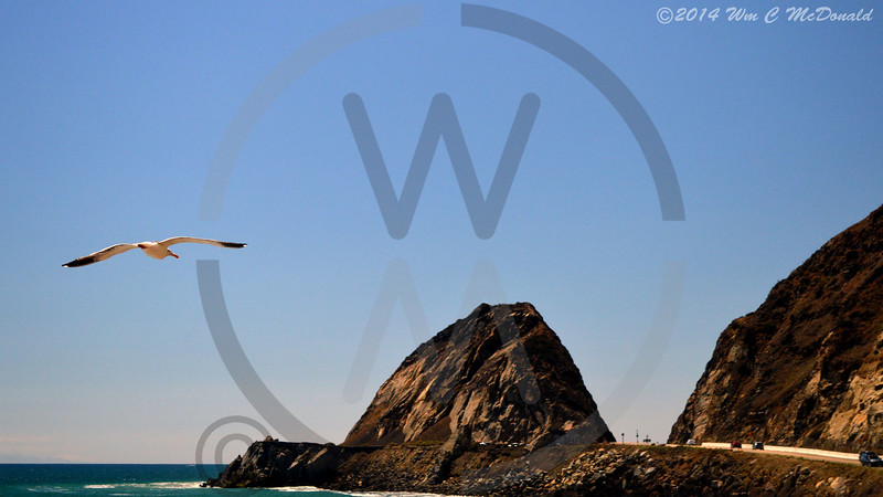 Big Rock and Seagull