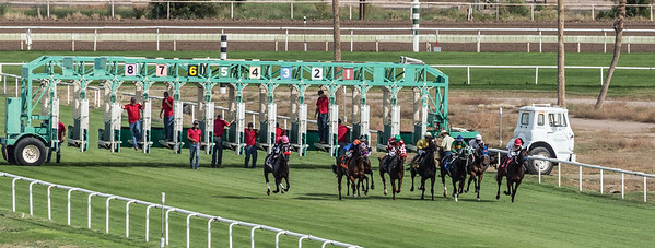 Turf Paradise Opening Day 18 October 2014 October 18 2014  006