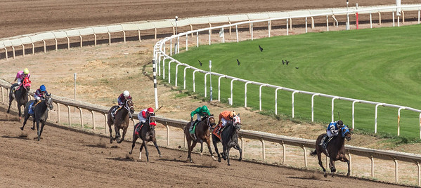 Turf Paradise Opening Day 18 October 2014 October 18 2014  004