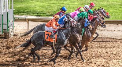 Turf Paradise Opening Day 18 October 2014 October 18 2014  003