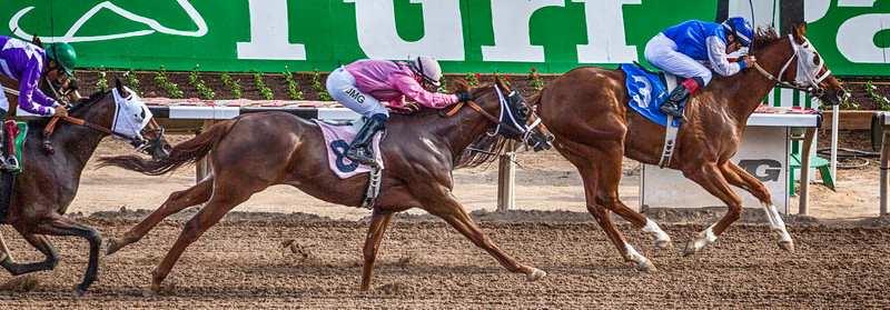Turf Paradise Opening Day 18 October 2014 October 18 2014  009