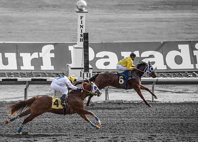 Turf Paradise Opening Day 18 October 2014 October 18 2014  002