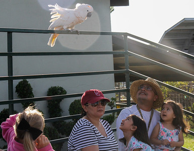 A parrot from The Pirate's Parrot Show catches the attention of the Reyes family, Gisela, Kamila, Venecia and Alberto, left to right on opening day of the Silver Dollar Fair Thursday May 25, 2017 at the Silver Dollar Fairgrounds in Chico, California. (Emily Bertolino -- Enterprise-Record)