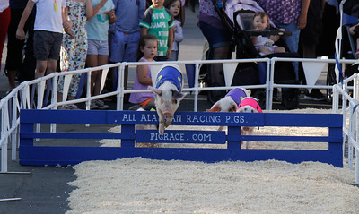 Pigs Race around the arena during the All Alaskan Racing Pig show on opening day of the Silver Dollar Fair Thursday May 25, 2017 at the Silver Dollar Fairgrounds in Chico, California. (Emily Bertolino -- Enterprise-Record)