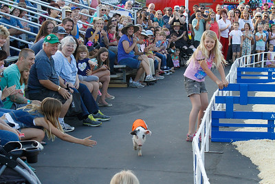 When ask to leap over an incredible high jump, this little piggie too the easy way out on opening day of the Silver Dollar Fair Thursday May 25, 2017 at the Silver Dollar Fairgrounds in Chico, California. (Emily Bertolino -- Enterprise-Record)