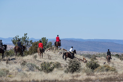 It's very common to see wild horses when on this hunt