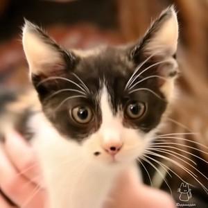 Kitty Ninja