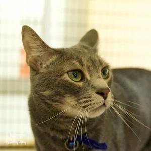 El Gato #84534