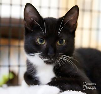 Bob (Kitten)
