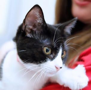 Gem (kitten)
