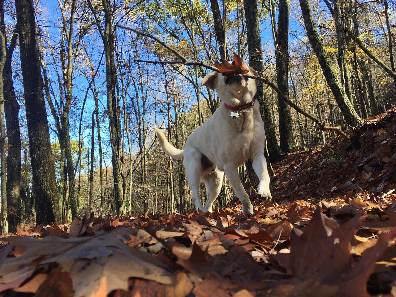 Day 151   November 10, 2015   near Blue Ridge, Georgia