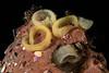 Haminoea sp. eggs