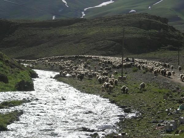 Çatak - Bahçesaray, 2005