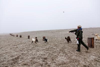 Nederland, Amsterdam, IJburg, Blijburg, hondenuitlaatservice, 15 december 2016, foto: Katrien Mulder