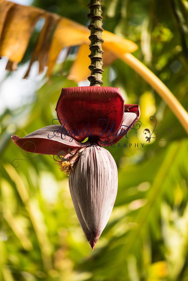 Banana tree flower