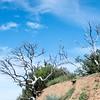 Bedford Peak Trail031517-21