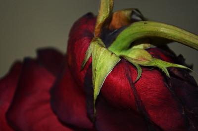 developflower