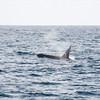 Orca 1a